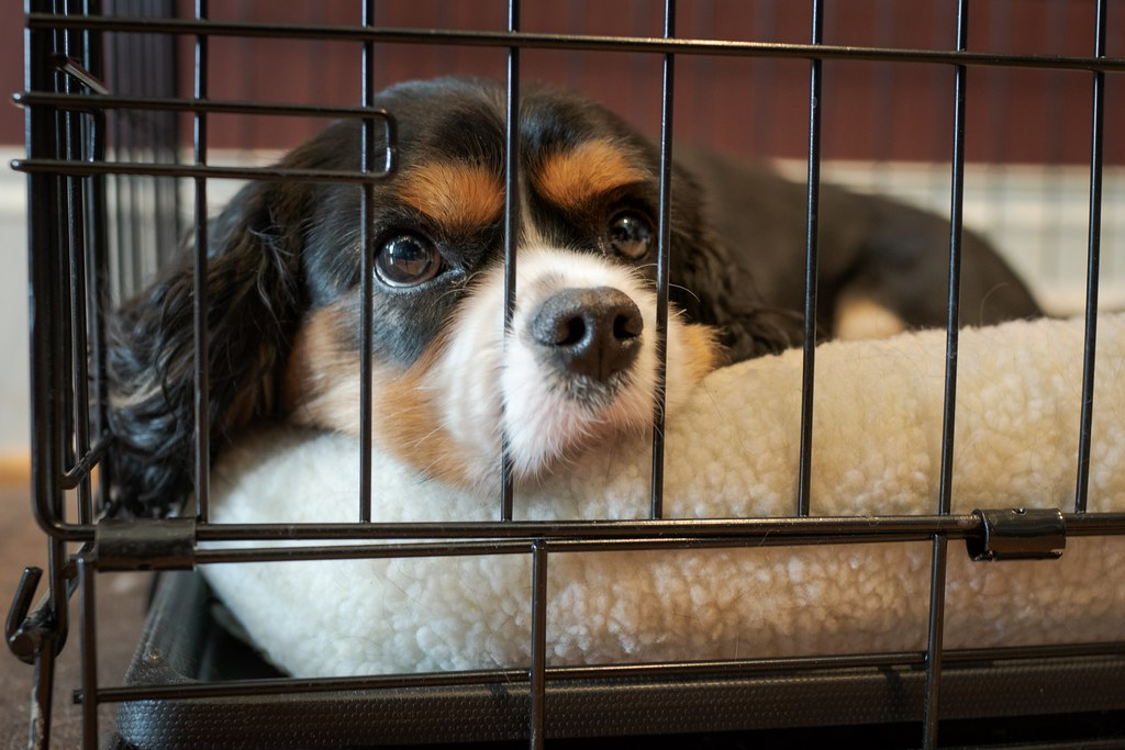 Best Dog Crates for Escape Artists