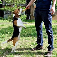 Top 3 Training Treats for Dogs with Sensitive Stomachs
