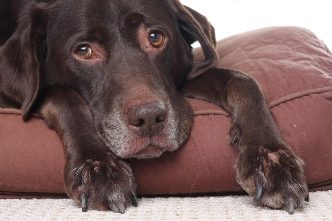 How to improve kidney function in dogs?