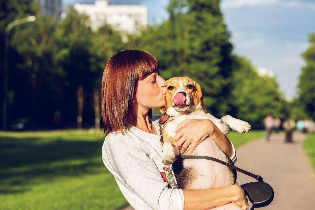Are Beagles Good Service Dogs? Find out here!